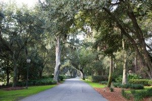 scenic spanish moss covered oak trees