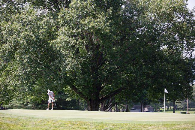 Fast golf greens