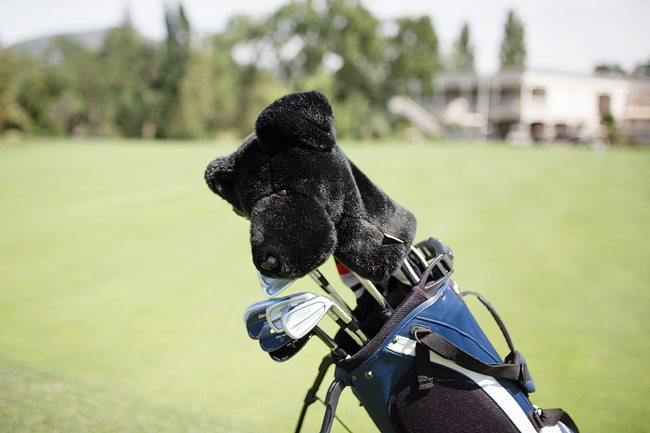 Whats in the bag - headcover